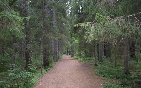В Эстонии под охрану возьмут больше лесов.