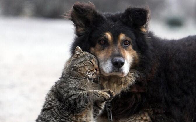 Sõbrad on tähtsad nii individualistidele kui ka kollektivistidele.