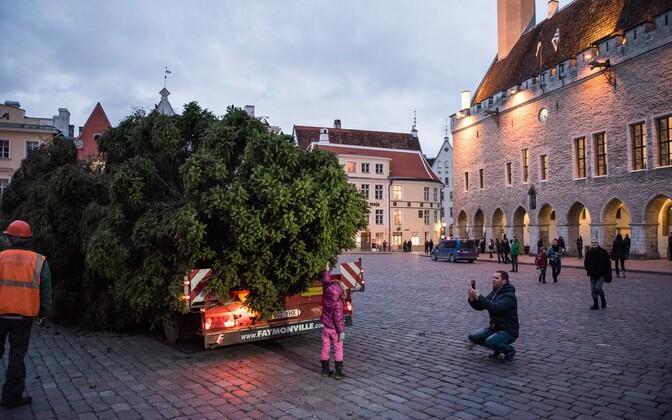 Tallinn public Christmas tree