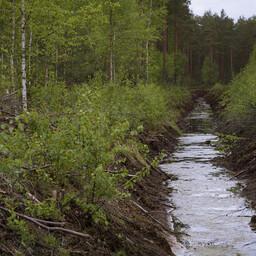 В лесу. Иллюстративный снимок.