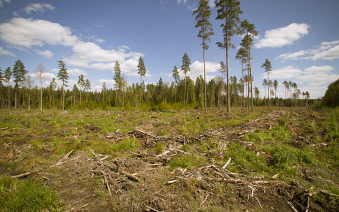 All 25 jobs of the Private Forest Centre are set to be relocated out of Tallinn.
