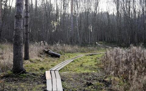Зона отдыха Эккекюла в Нарве, в которой было обнаружено тело 14-летней Дарьи.
