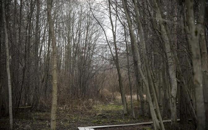 На заднем плане виден дом, в котором жила 14-летняя Дарья.