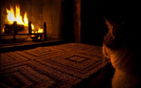 Kass kamina ees.