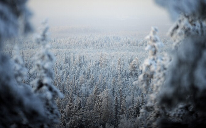 Pakane Soomes