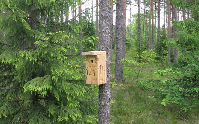 Kõige lihtsam viis loodust hoida on paigaldada pesakast, usuvad Kooslooduse asutajad.