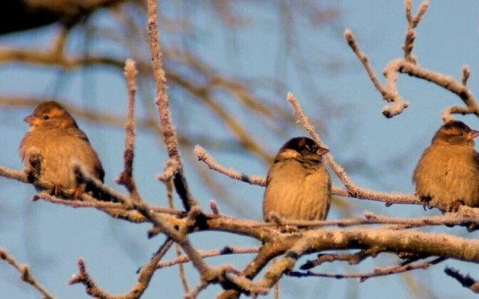 Фотографии наблюдателей за птицами в саду.
