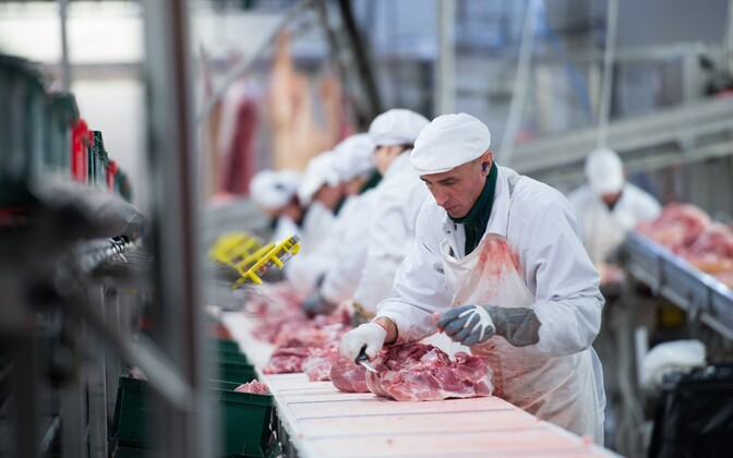 Butchers on the line at Rakvere Meat Processing Plant.