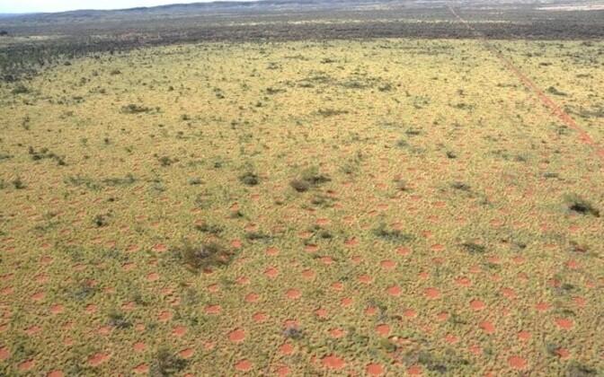 ''Haldjaringid'' Austraalias.