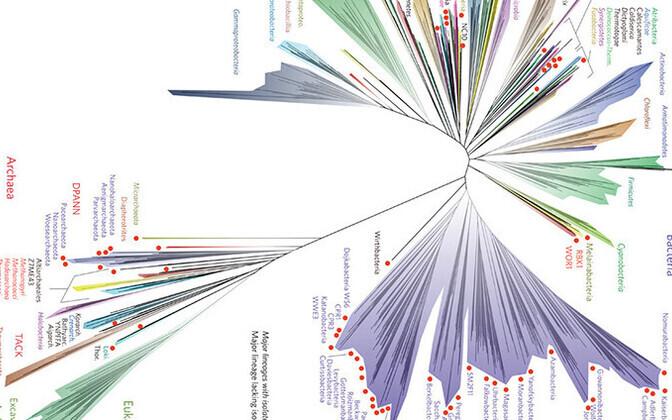 Koostatud evolutsioonipuu.