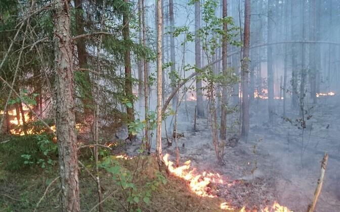 Kuningaküla põleng