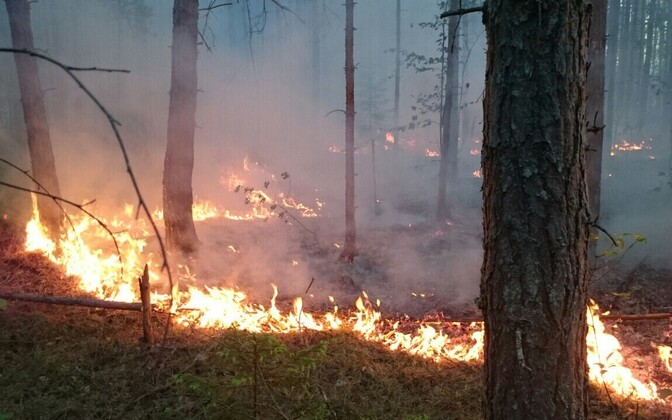 Forest fire near Kuningaküla, Ida-Viru County. The extraordinarily dry summer has seen several forest fires already in Estonia as well as Latvia, both countries have banned open fires and fireworks.