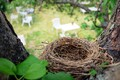 A bird's nest with a view overlooking tables and chairs set up for a garden café behind Voronja Gallery.