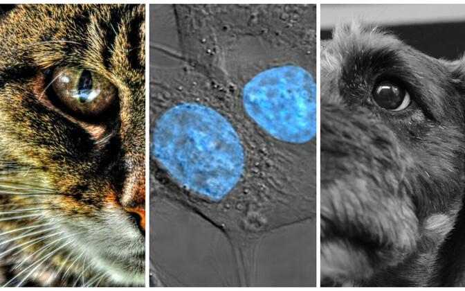 Arvutile võib õpetada, milline objekt on parasjagu pildil - kass, koer või hoopis vähirakk.