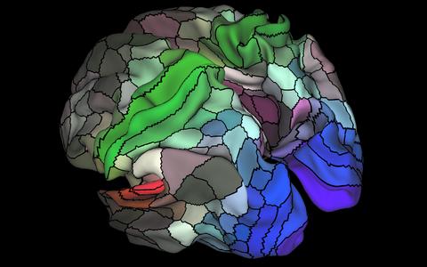 Ajus võib eristada 180 erinevat ajupiirkonda.