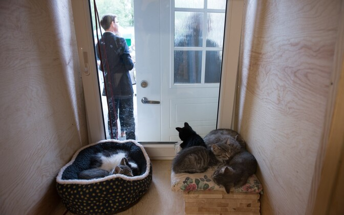 Tallinn Animal Shelter is now located at Paljassaare 85.