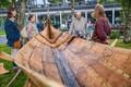 Viikingid lennusadamas