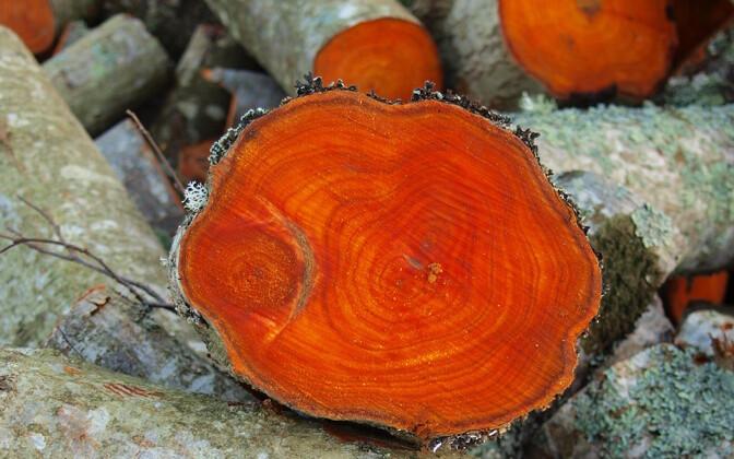 Fraktsioneerimistehase tehnoloogia võimaldab kõik komponendid puidust kätte saada.
