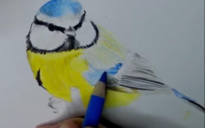 Kuidas joonistada sinitihast?