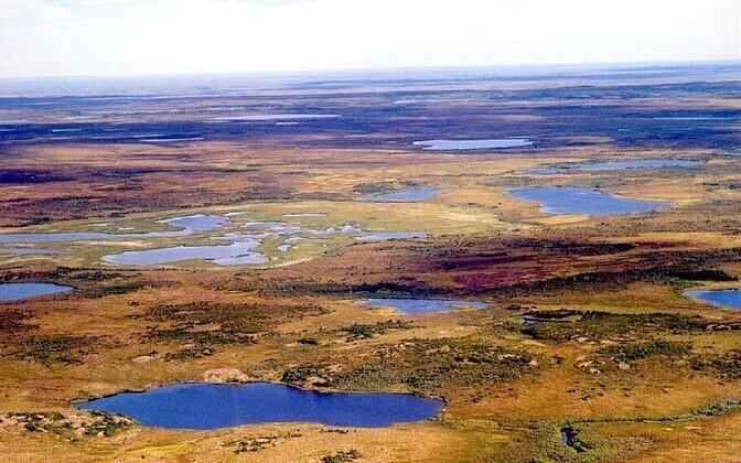 Selline võis näha taimestik ja maastik välja jääaja üleminekul jäävaheajale ehk pärast tugevat kliimasoojenemist 11 000 aasta eest.