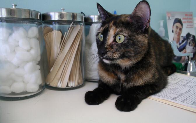 Kass loomaarsti juures.