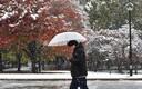 Tokios sadas lund