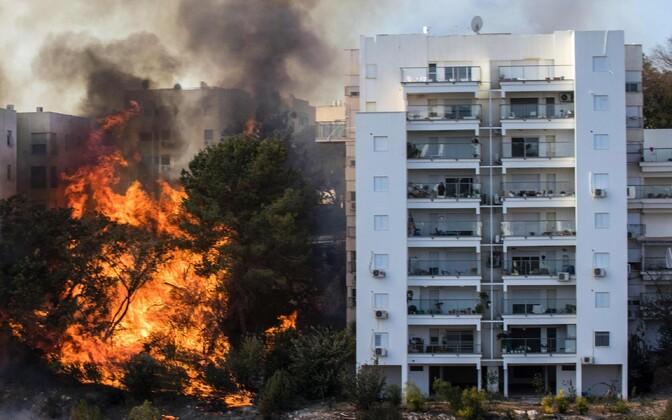 Огонь быстро распространяется из-за сухого горячего ветра, пламя уже достигло города Хайфы
