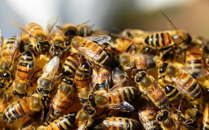 Biosemiootika uurib, kuidas elusolendid, nagu näiteks rakk või mesilassülem, tajuvad maailma ja selle tähendusi ning milliseid märke nad eristavad ja suhtlemises kasutavad.