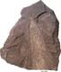 (Joonis 1) Graptoliitargilliit koos hästi säilinud graptoliidiRhabdinopora flabelliforme (Eichwald) jäljendiga, Türisalu pank.