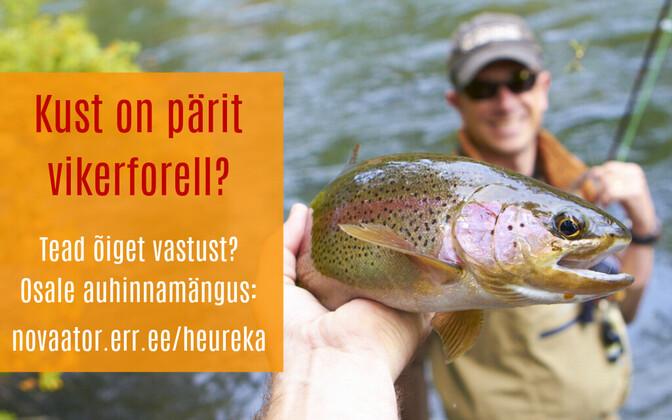 Auhinnamängus osalemiseks pole vaja teha muud kui vastata küsimusele lehel novaator.err.ee/heureka