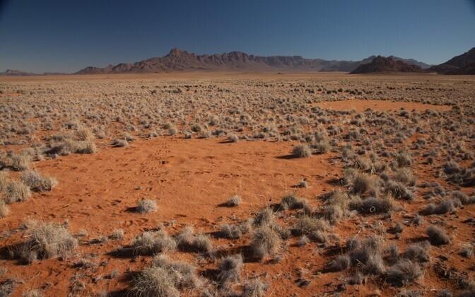 Nõiaringid Namiibia kõrbes.