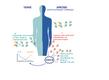 Tervetel inimestel tekivad haigustekitajate (viiruste, bakterite) vastased antikehad. Autoimmuunhaigusete mudeli APECED patsientidel tekivad lisaks autoantikehad, mis põhjustavad haigust. Interferoonide toimet blokeerivad antikehad osutusid aga diabeedi e