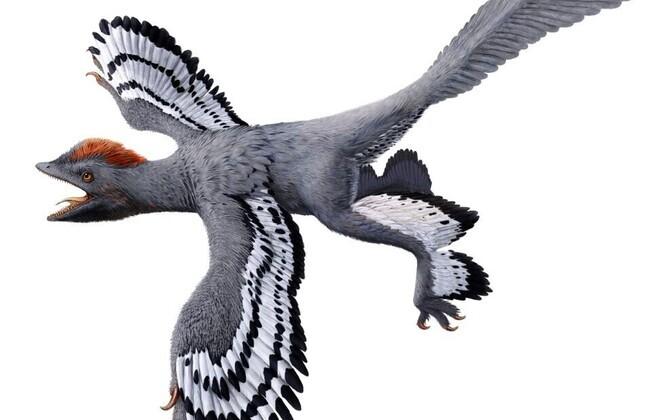 Anchiornis kunstniku nägemuses.