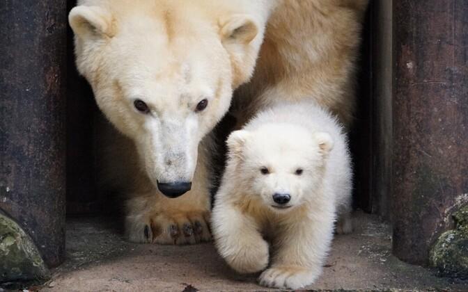 Первая прогулка медвежонка.