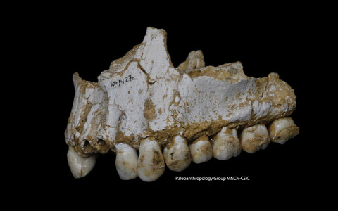 El Sidroni koopast leitud lõualuu.