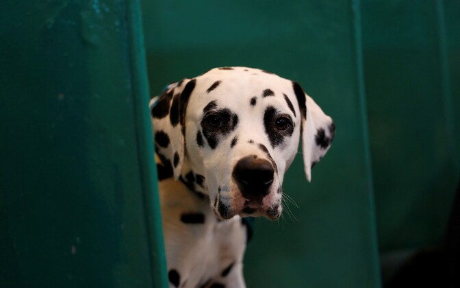 Dogs bought from puppy mills often turn out to be sick, weak, or not at all the breed the buyers paid for.