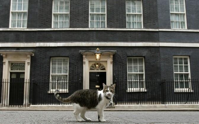 Кот Ларри живет в резиденции британского премьер-министра на Даунинг-стрит, 10.