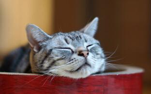 Teadlased väidavad nüüd oma katsete põhjal, et kassid hoolivad inimestest ikka küll.