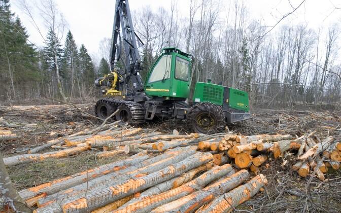Metsa langetamine.