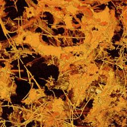 Fossiilid meenutavad seeneniidistikke.