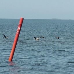 Buoys will be installed along the water border separating Estonia from Russia. Photo is illustrative.