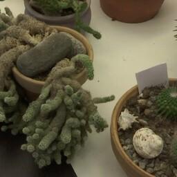 Kaktused.