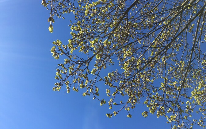 Весна. Иллюстративное фото.