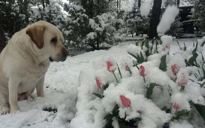 Lumine Saaremaa 10. mail