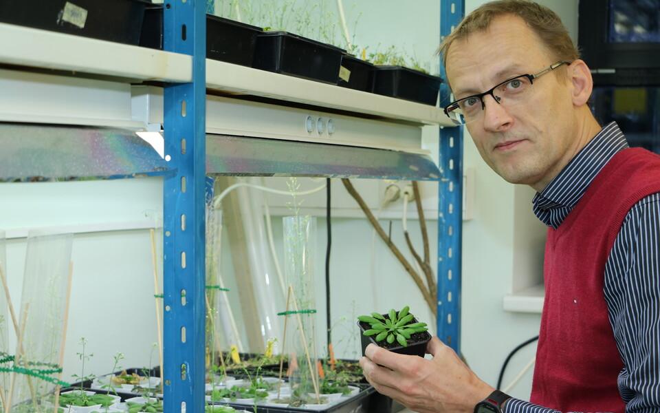 Tartu ülikooli molekulaarse taimebioloogia professor Hannes Kollist.