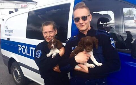 Полицейские и их очаровательные четвероногие помощники.
