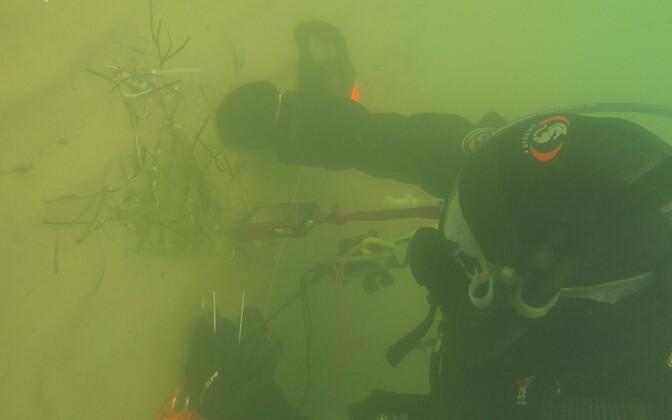 Mereteadlased välitööl.