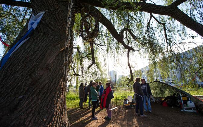 Для окружающей среды исчезновение заторов в Хааберсти важнее одной ивы, считает Таави Аас.