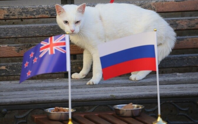 Букмекерские конторы предсказывают победу в первом матче сборной России