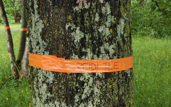 Reidi tee projekti vaidlustajad on sidunud teele ette jäävate puude külge lindid